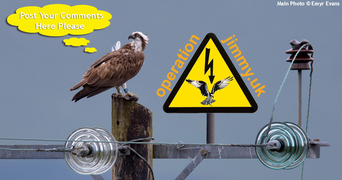 image with Osprey sitting on a power pole with caption Please Post Your Comments Here and also featuring logo