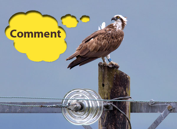 Image of Blue 24 on power pole at Dyfi Osprey Project © Emyr Evans, with a speech bubble saying 'Comment'