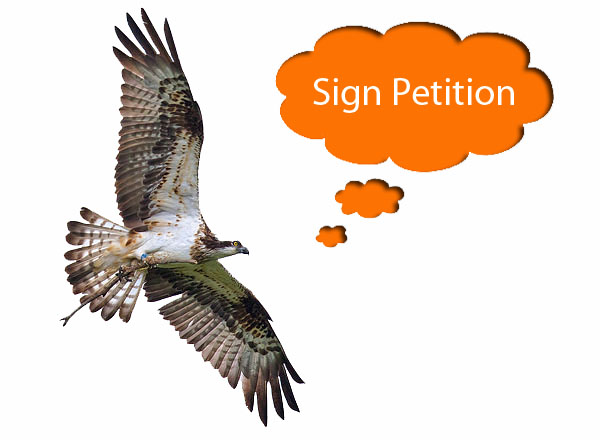 image compilation of an Osprey in flight © Emyr Evans with a speech bubble 'Sign Petiton' and a small box citing the need for 10,000 signatures