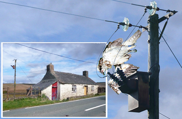 mock up of Jimmy electrocuted at the 'killer pole', Hiraeth cottage, north of Pentrefoelas