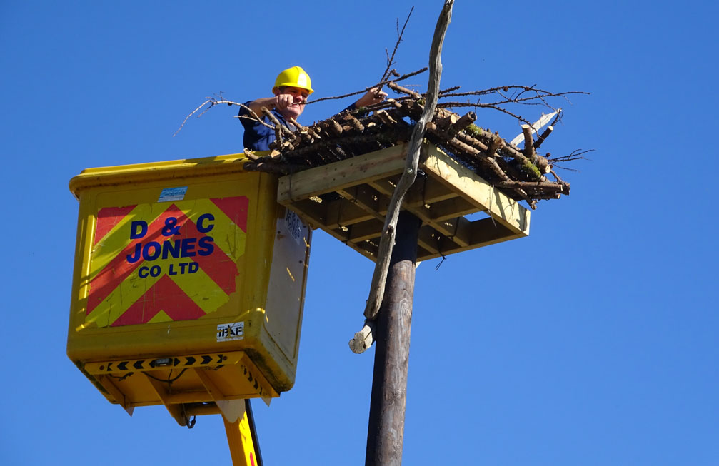 Darren Moore of Friends of the Ospreys putting the finishing touches to a new Osprey Pole Nest