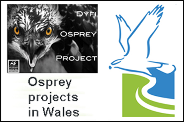 Logos for the 2 Osprey Projects in Wales - at Dyfi + Glaslyn