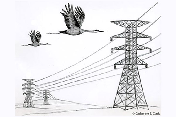 Picture by Catherine E. Clark of swans flying towards power lines between pylons