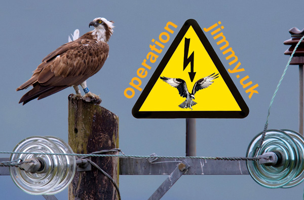 Osprey on Power Pole ? Emyr Evans with 'Operation Jimmy' logo