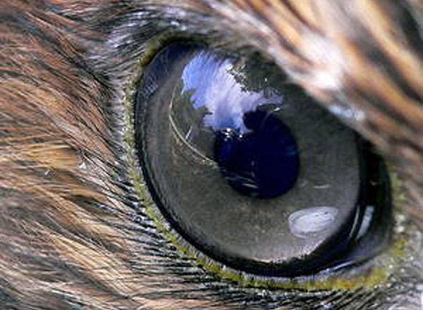 image of a hawks' eye to represent this topic